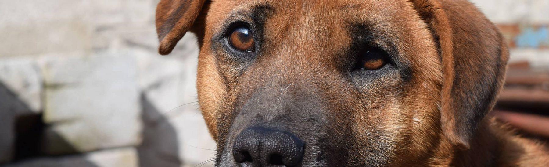 dog_euthanasia